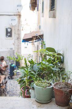 Lisbon Vegan Food Guide: The food temple