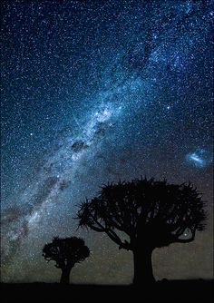The Milky Way, as seen from Namibia, looking down upon some broccoli trees.