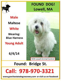 Granite State Dog Recovery Found Male Maltese: Lowell, MA 6-4-14 Young Adult, wearing Blue harness. Found in the area of Bridge St.. Currently being held by Lowell Animal control. Please share to help this little on to find his family! Call: 978-970-3321