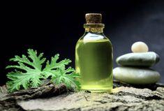 olejek geranium, pelargonia pachnąca anginka Mosquitos, Lemon Grass, Geraniums, Detox, Shampoo, Personal Care, Beauty, Urban, Garden
