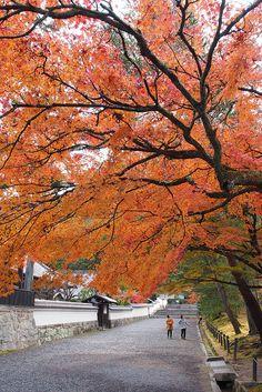 Japan. Autumn in Kyoto, Nanzenji temple