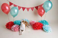 Dog Cake Smash | Maggie | Amanda Dams Photography