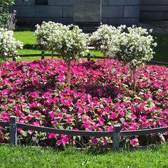 Kukkaloistoa #istutukset #säätytalo #kesä #helsinki #snellmaninkatu #cityflower  #cityscape #citywalk #flowers #floweroftheday