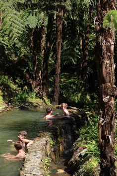 Caldeira Velha  #azores #visitazores #tropical #tropicalmood