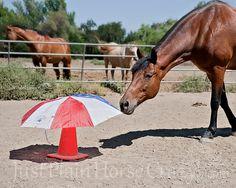 Umbrella Cone Trail Obstacle - PetDIYs.com
