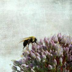 bee on garlic by Photogenic Gallery