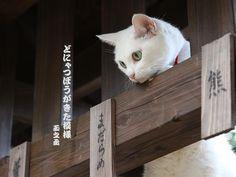 Twitter / nekozamuraiinfo: 玉之丞さま、なにか見つけられたのですか? #猫侍