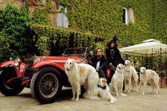 man woman sports car borzoi dog