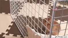 Bunny escape from cage