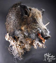 wild boar taxidermy
