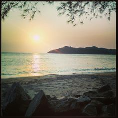 #sunset  #casurina