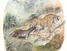 Metailurus Miocene-Pleistocene