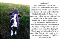 LOST Dog last seen in Rio Linda, CA