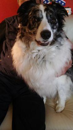 Hunde Foto: Kirstin und Barry - Mein Seelenhund ein Bandito Hier Dein Bild hochladen: http://ichliebehunde.com/hund-des-tages  #hund #hunde #hundebild #hundebilder #dog #dogs #dogfun  #dogpic #dogpictures