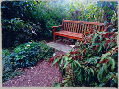 A secluded spot in the Boronia see tonight of the Royal Botanical gardens in Sydney
