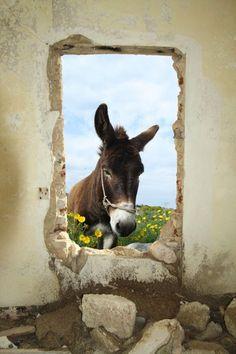 grappig! een ezeltje dat bij je binnenkijkt...