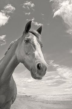 """""""Playful Pal"""", 5x7 Inches and Larger, Fine Art Print Only, Sepia Photograph, Horse Art. A horse buddy, captured on camera by me in the magnificent wide-open yellow grasslands of the Arizona-Mexico border!."""