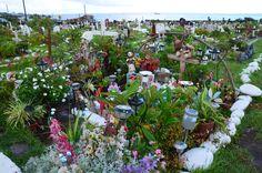 Hanga Roa, Rapa Nui =Isla de Pascua, 2013. Cemetery, Day, Plants, Photography, Easter Island, Islands, Fotografia, Memorial Park, Fotografie