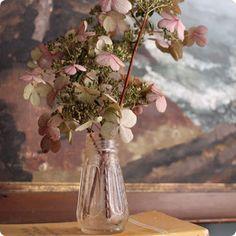 Dried Hydrangea..