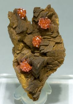 specimens/s_imagesY1/Vanadinite-EV10Y1f.jpg