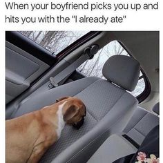 These memes are sometimes just so funny and relatable to everyone. Funny Pix, Funny Laugh, Funny Cute, Funny Dogs, Cute Dogs, Funny Animals, Funny Pictures, Cute Animals, Hilarious