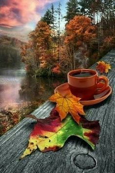 Autumn Morning Sunrise on this autumn day appeared with glimmering light. Autumn Morning, Autumn Cozy, Autumn Fall, Good Morning Coffee Gif, Creation Art, Autumn Scenes, Fall Wallpaper, Autumn Photography, Fall Pictures