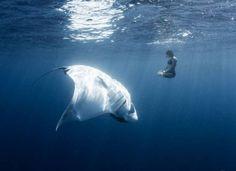 scary sea-sting ray
