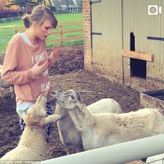 Just bleat it: Taylor Swift calls sheep 'rude' after visiting them at a farm on Monday - p...