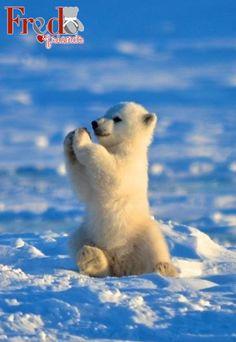 ¡Es viernes y el oso lo sabe!