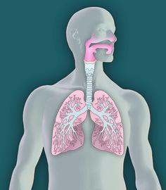 Marco Vaglieri • Lungs, 2006