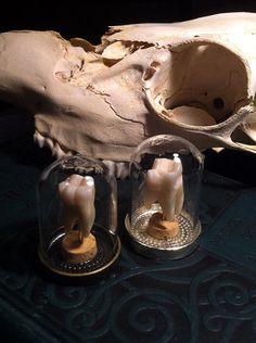 Real Human Molar Regular Quality Specimen Display in by BoneLust