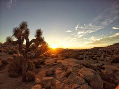 Joshua Tree National Park California 2.Day  #usa #photography #photographer #photo #photoeverydayfromroadtrip #photoeveryday #photooftheday #nikon #throwback #2015 #california #evening #roadtrip #travelling #desert #inthemiddleofnowhere #beautiful #reflection #campsite #landscape #wideview #lost #camper #startingoff #impressions #remember #traveler #roadtrips #joshuatreenationalpark #roadtrip2015southwestusa @photoarena_nature @mr.goodtravel @travel_motivations by seablue_island