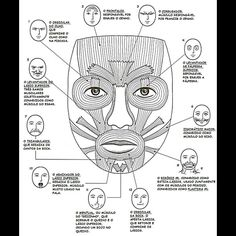 1000 images about musculos on pinterest boxers for Oral motor exercises for adults
