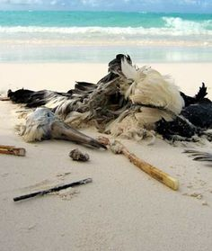 Body Glove News-Stories-Updates: Stop Plastic Pollution and the Killing of Wildlife