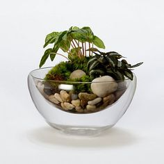 Floating Sand Bowl contemporary indoor pots and planters