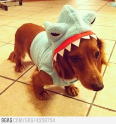 15 Pets Wearing Shark Week Costumes Because... Why Not? : Obsessed: Entertainment: glamour.com