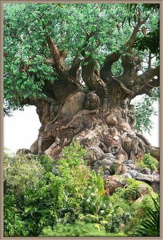 old old ancient Tree.