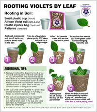 Houseplants for Better Sleep Violet-Potting