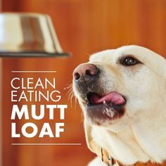 """Make your own dog food and know exactly what your best friend is eating. Try this """"Mutt Loaf"""" recipe for your furry friend!"""