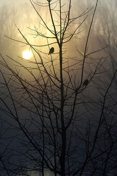 Foggy Morning Birds