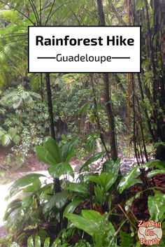 Hiking in the rainforest - Guadeloupe islands - Travel Guide- photos and practical information