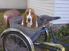 Basset Bicycle