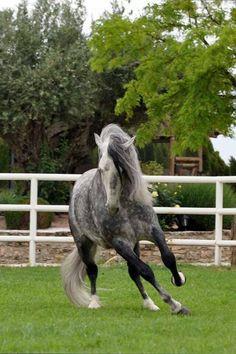 Beautiful mare! ♡ ♥ ♡