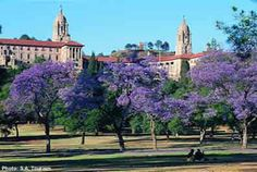 Jacaranda trees in Pretoria - South Africa South Africa Tours, Kwazulu Natal, Port Elizabeth, Kruger National Park, Pretoria, African Countries, What A Wonderful World, Africa Travel, Best Cities