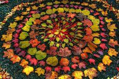 Beautiful Leaf Art