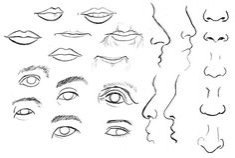 Human Anatomy Fundamentals: Advanced Facial Features