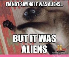 Superstitious cat tsk tsk tsk tsk you shouldn't watch scooby doo cat if u can't handle it