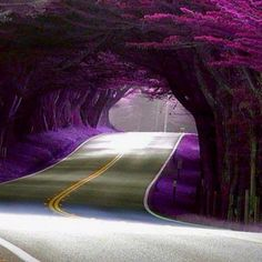 Tree tunnel, California; FALLNOW for CONTRAST IN COLOR THEORY  PREVIOUS SUMMER FALL NOW !
