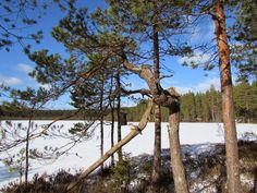 Kirkaslampi at Seitseminen National Park   ~Finnish nature through my eyes - Sari Lapikisto