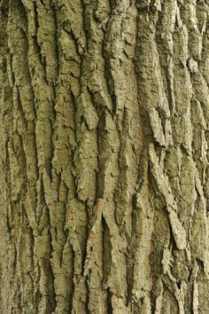 Tree Trunk Drawing, Tree Bark, Photo Tree, Wood Texture, Painting For Kids, Wood Colors, Craftsman, Flora, Stock Photos